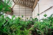 Perth - Huge Indoor Plant Warehouse Sale - Springtime Splendour
